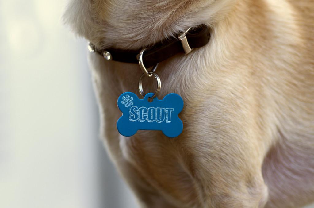 Etch_Scout-1024x678